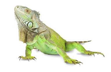Iguana Signs & Graphics | Signage and Signwriters Brisbane